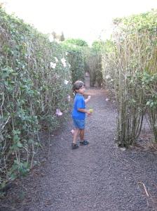 Plantation Maze