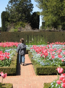 walking with tulips